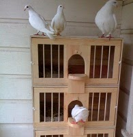 Pigeon Nest Boxes and Perches http://mickaboo.org/newsletter/apr11/art3.html